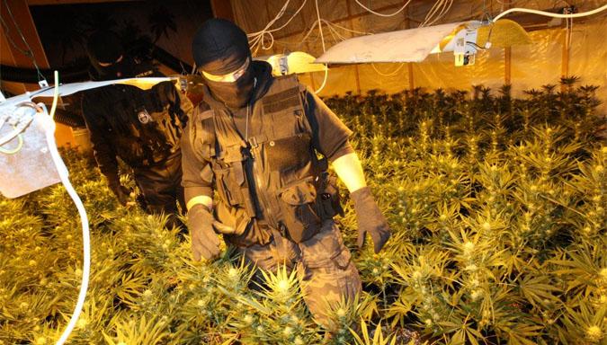Czech Republic's Drug Laws