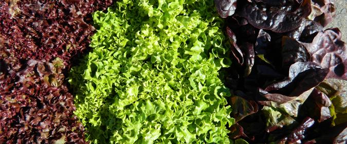 Deciphering Czech Vegetables