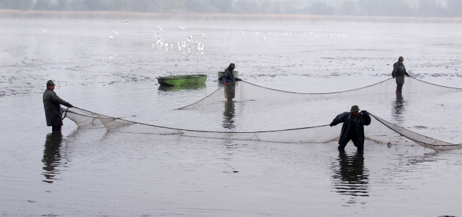 Fishing for Tradition