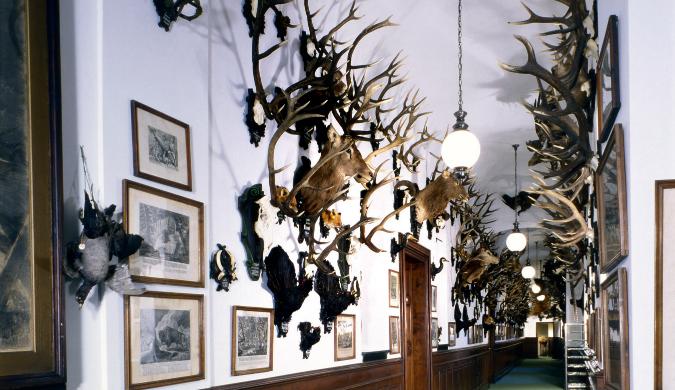 Trophy hall at Konopiště Castle