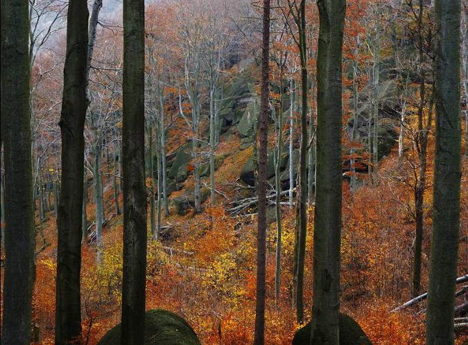 Jizerskohorské bučiny/Photo: Rihovaj via Wiki Commons