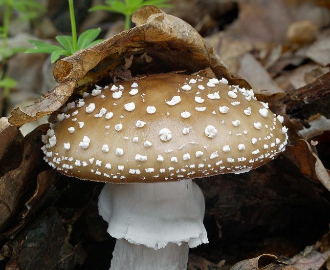 , In Photos: Magnificent Czech Mushrooms, Expats.cz Latest News & Articles - Prague and the Czech Republic, Expats.cz Latest News & Articles - Prague and the Czech Republic
