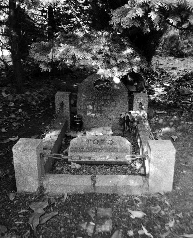 Toto, Zvířecí hřbitov, 2000
