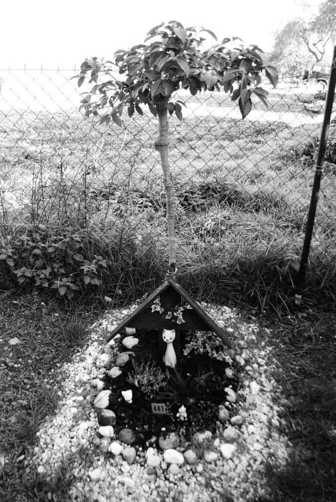Unknown, Zvířecí hřbitov