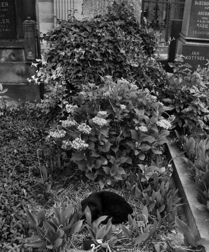 Unknown cat grave, Vyšehradský hřbitov