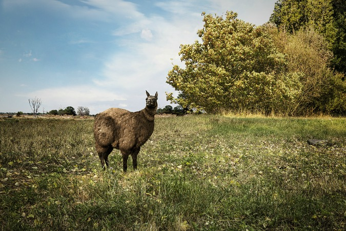 , Obese Animals Exhibit Opens at Náplavka, Expats.cz Latest News & Articles - Prague and the Czech Republic, Expats.cz Latest News & Articles - Prague and the Czech Republic