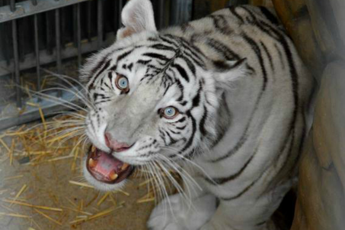 Photos: Facebook / Zoo Liberec