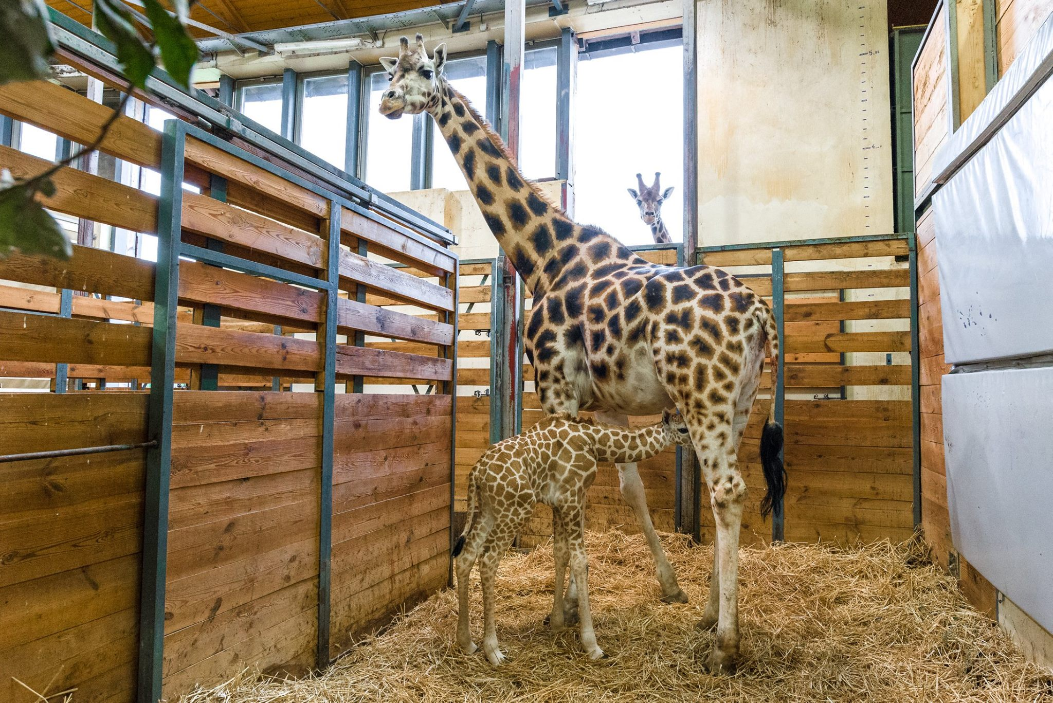 Photo: Facebook / Prague Zoo
