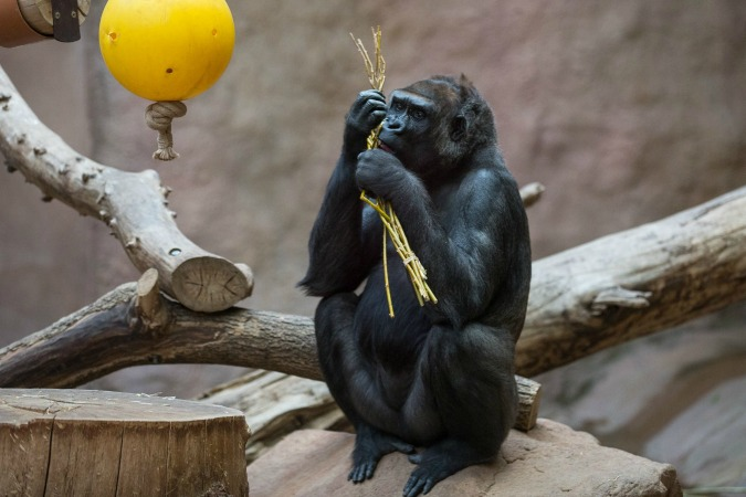 Prague Zoo Animals Play with, Feast on Easter Whips