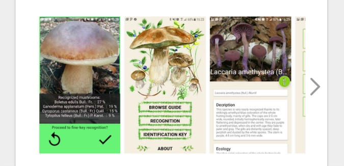 , New App Brings Czech Mushroom Hunting Into the 21st Century, Expats.cz Latest News & Articles - Prague and the Czech Republic, Expats.cz Latest News & Articles - Prague and the Czech Republic