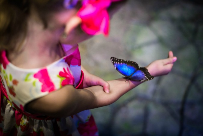 Photo: Papilonia Butterfly House / Facebook