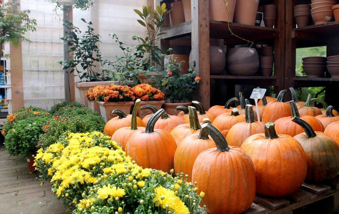 , Pumpkin Season In Prague and the Czech Republic, Expats.cz Latest News & Articles - Prague and the Czech Republic, Expats.cz Latest News & Articles - Prague and the Czech Republic