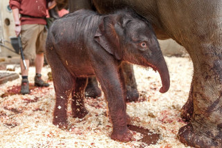Asian elephant born in Prague zoo, another birth expected soon