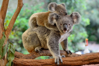 Prague Zoo has raised 23 million crowns to support fire-afflicted Australian wildlife