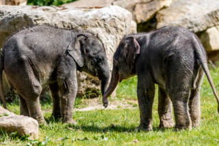 Prague Zoo's baby elephants to be named at a public ceremony this Sunday