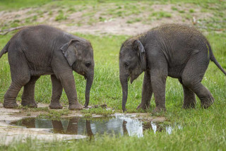Prague Zoo's baby female elephants now have names