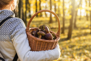 Autumn's best in a basket: how to forage for mushrooms like a Czech