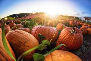 Pumpkins, cider, and color walks: a complete guide to autumn in the Czech Republic