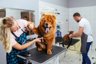 Pet salons, allowed to reopen, face a barrage of customers
