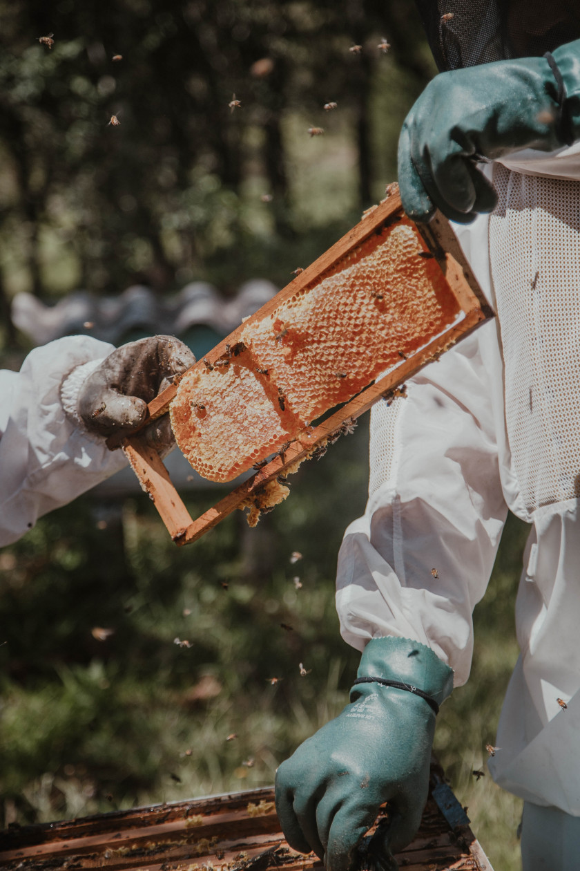 Beekeepers. Photo by Arthur Brognoli from Pexels