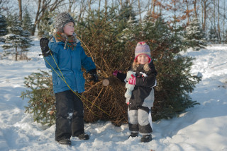 On the hunt for that perfect Christmas tree? Here are some tips