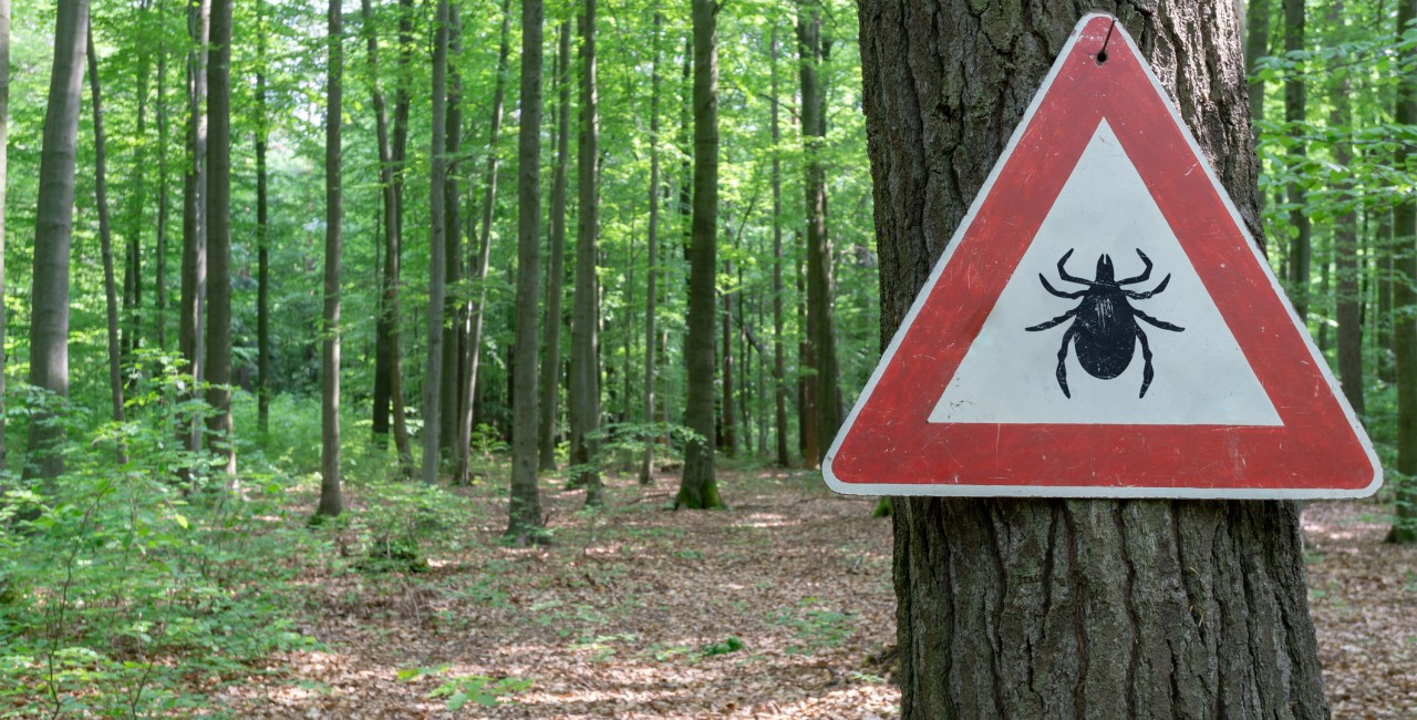 Ticks are common in wooden areas of the Czech Republic. (Photo: iStock,
