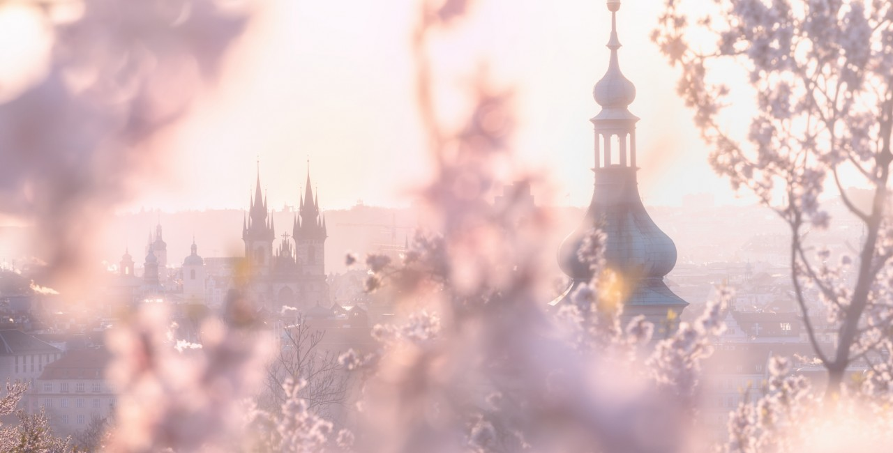 View of Prague with cherry blossoms via iStock / Michal Balada